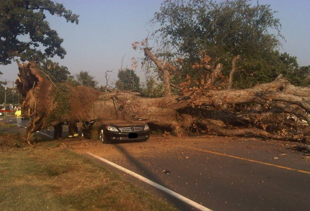 > Jul 18 - One Killed as Huge Tree Crashes onto Car - Photo posted in BX Daily Bugle - news and headlines | Sign in and leave a comment below!