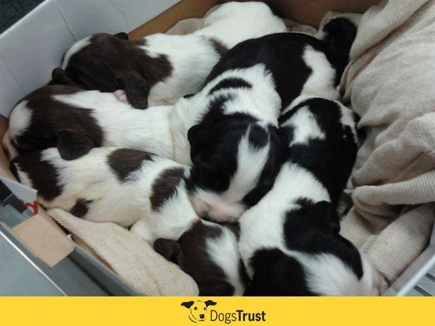 Pups-1.jpg