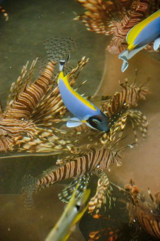 fishy-2.jpg