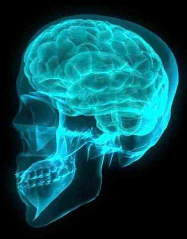 How-Shape-Perception-Develops-in-the-Human-Brain-2.jpeg