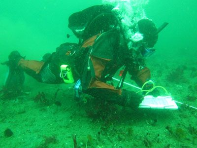 Diver-along-a-transect2.jpg