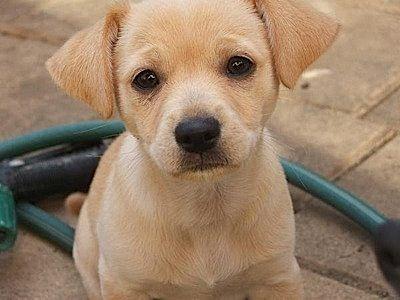 cute-dog4.jpg