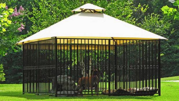 dog-kennel-2_650x366.jpg