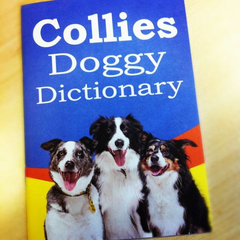 collie-dictionary.jpg