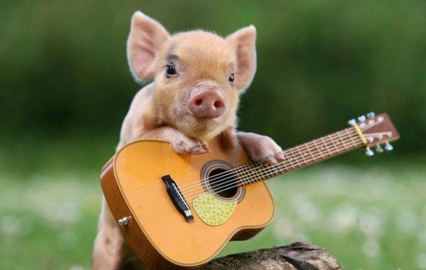 cute pig 2.jpg