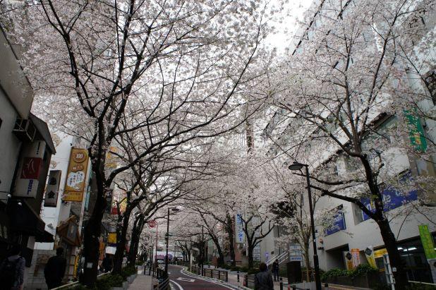 110408_sibuya_01.jpg