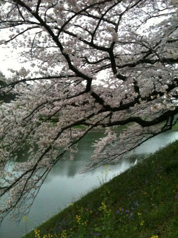 Photo on 2011-04-09 at 17:47.jpg