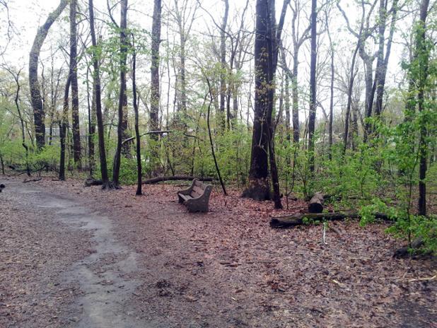spring_woods_bench.jpg