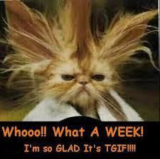 TGIF Crazy Cat.jpg
