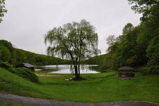 lakeshot tree.jpg