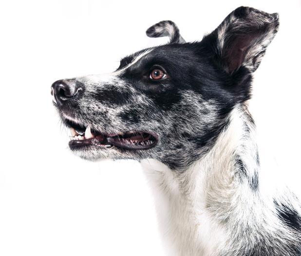 animal-dog-pet.jpg