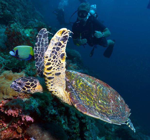 turtle-diving-krabi-with-kontiki-dive-center.jpg