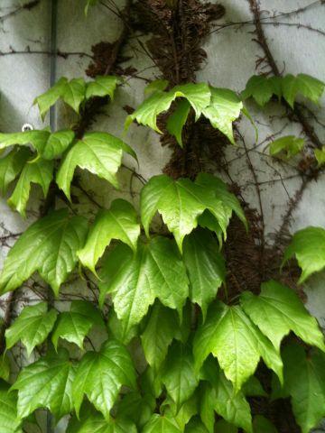 Photo on 2011-05-07 at 11:37.jpg