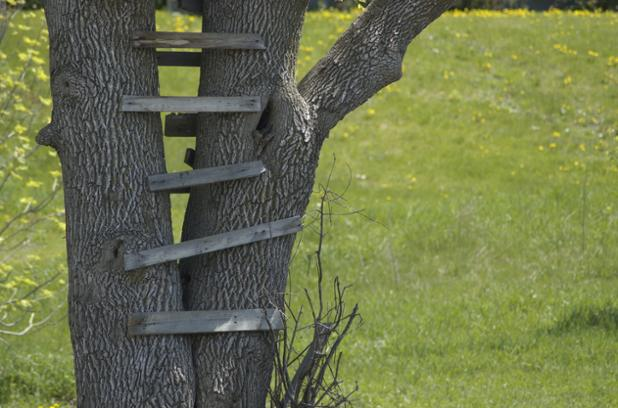 tree-house-ladder-shutterstock.jpg