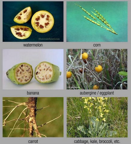Agriculture - what food would look_like without genetic engineering - geneticliteracyproject.org - June 17,_2015.jpg.png