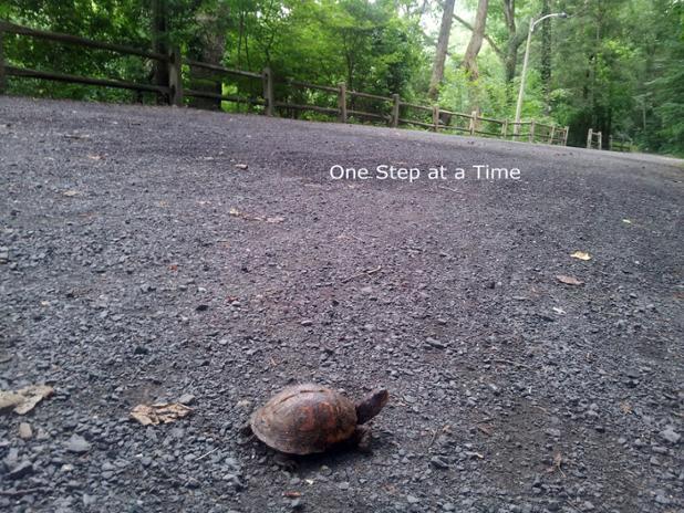 turtle on path.jpg