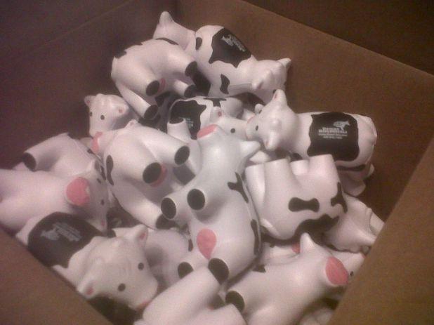 Cows!!.jpg