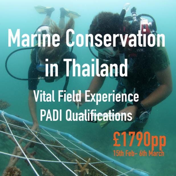 Thailand Feb3.jpg
