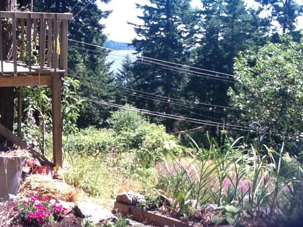 Photo on 2011-07-08 at 13:49.jpg