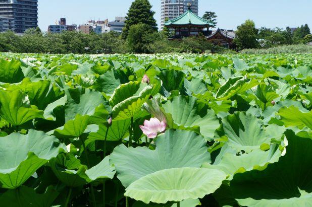 110717_ueno_01.jpg
