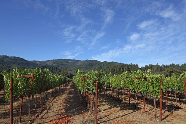 Beckstoffer_Las Piedras vineyard_web.jpg