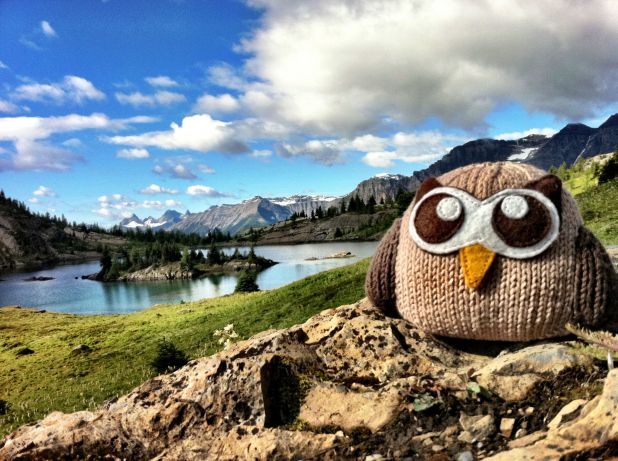 Owly Images