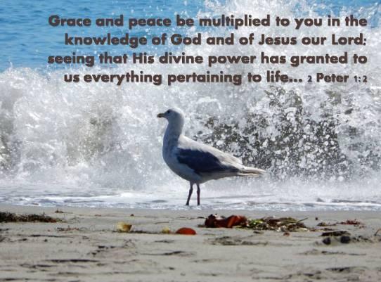 Seagull-scripture.jpg