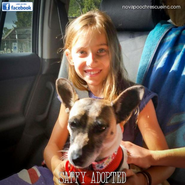 Saffy Adoption.jpg