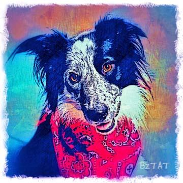 black-white-border-collie-dog-digital-portrait-BZTAT-LR.jpg