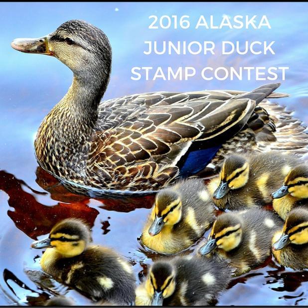 2016 ALASKA JUNIOR DUCK STAMP CONTEST.jpg