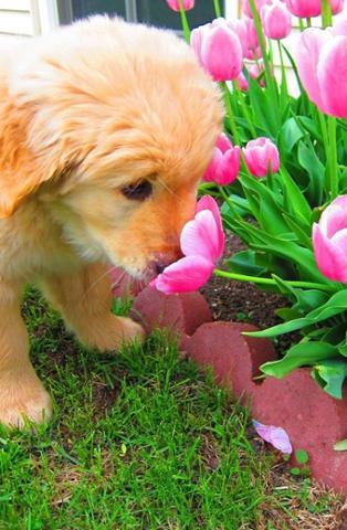 Spring Cute Puppy Photo.jpg
