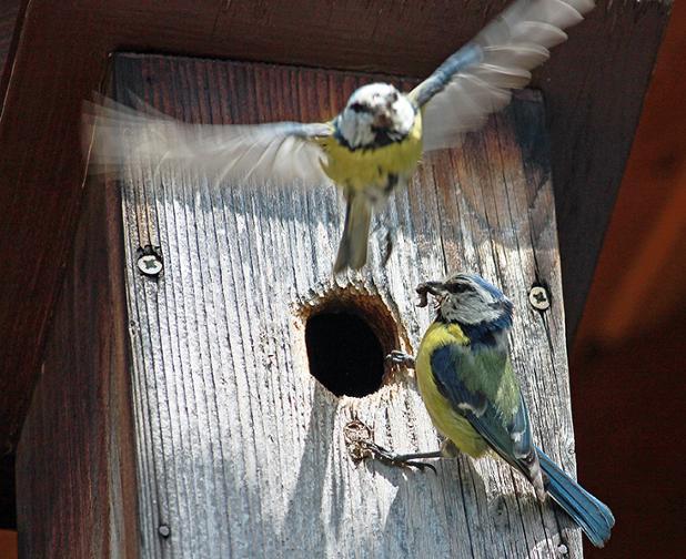 nesting-box-800.jpg