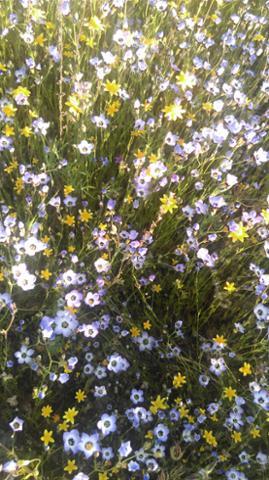 flowers_KB_Missimer.jpg
