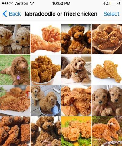 Food Or Dog_4.jpg