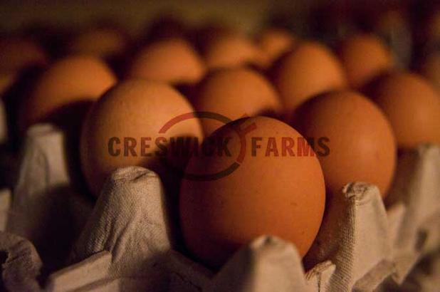 Eggs 2a.jpg