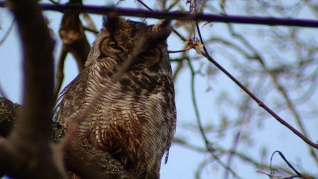 owl-tree.jpg