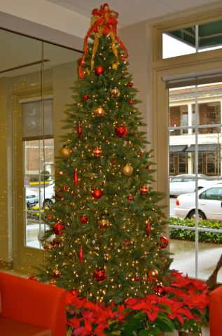 Tarley Robinson Christmas Tree 2011.jpg