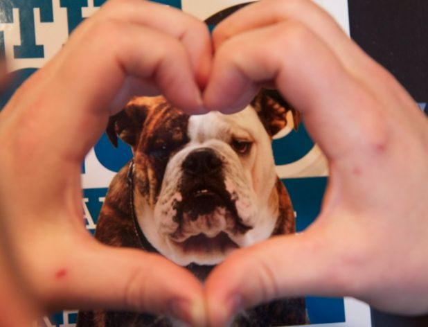 Bulldawg heart.jpg