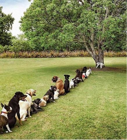 What Happens When We Cut Too Many Trees.jpg