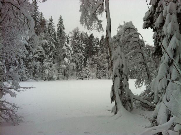 Photo on 2012-01-21 at 17:29.jpg