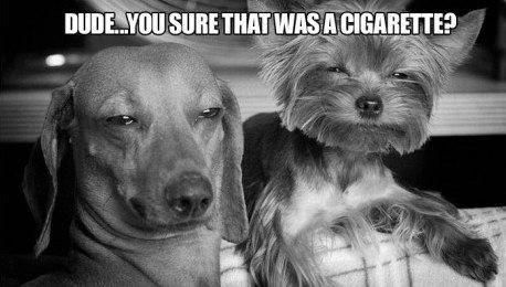 Dude you sure that was a cigarette.jpg