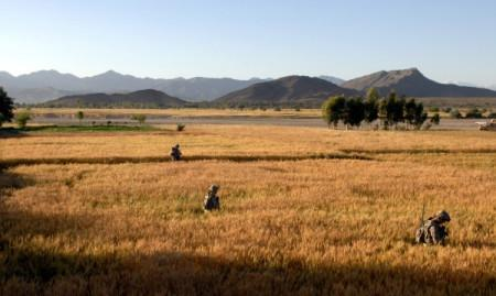 khowst-wheat-fields.jpeg