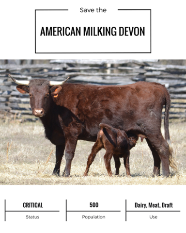 American Milking Devon (1).png