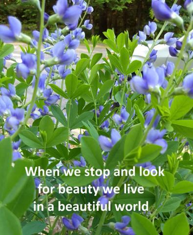 stop beauty.jpg