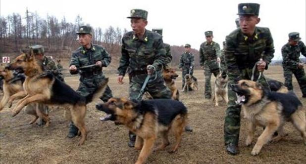 North-Korean-soldiers-take-part-in-training-with-military-dogs-at-an-undisclosed-location-April-6-2013-AFP-800x430.jpg