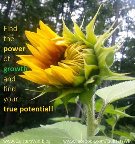 sunflower unfold - Copy.jpg