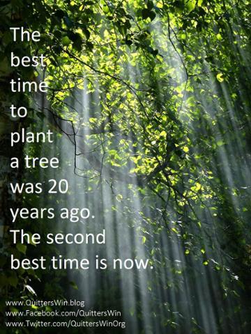 8.3.2017 plant a tree.jpg