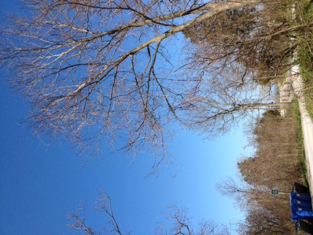 leafout l'ecolosion des feuilles 2012-04-18.jpg