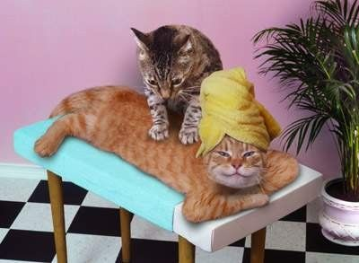 Day_at_Spa_Kitties.jpg