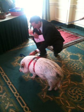 Cong. Flake with the CAGW pig.jpg
